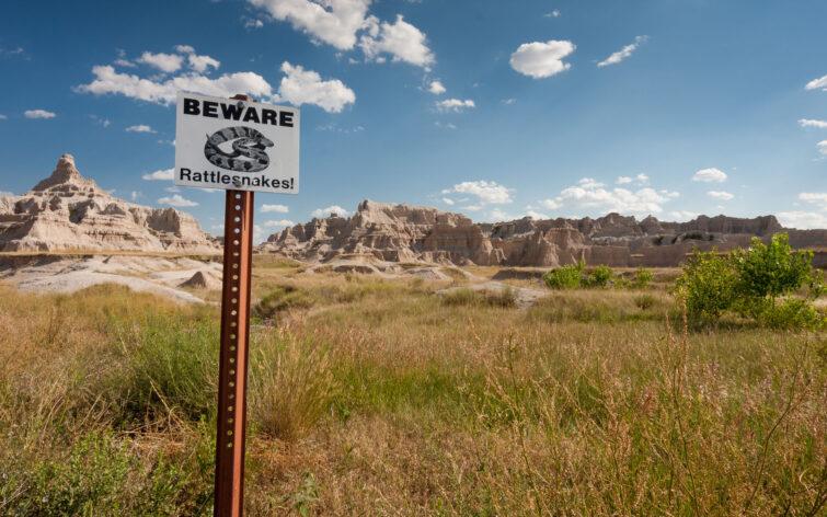 Beware Rattlesnakes | © Eric Shambroom Photography